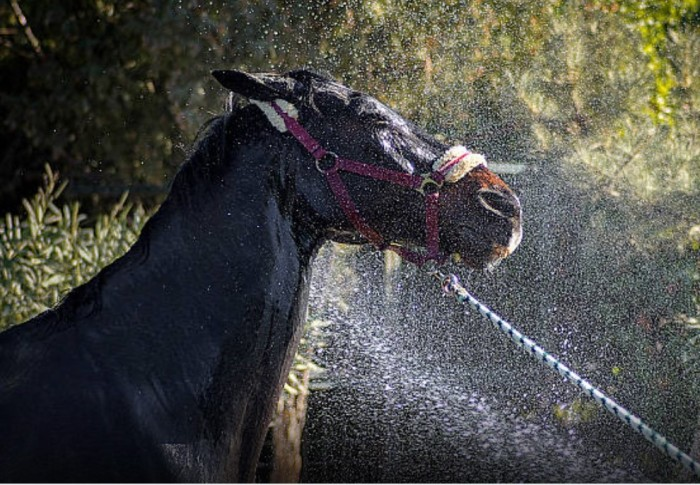Lead a Horse to Water